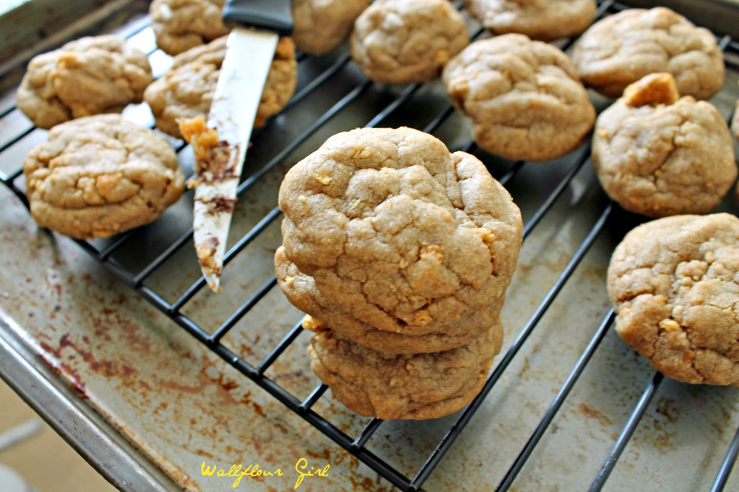 Brown Sugar Cookie Butter Graham Cracker Cookies 8--100813